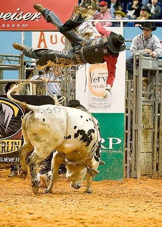 Bull Rider Thrown