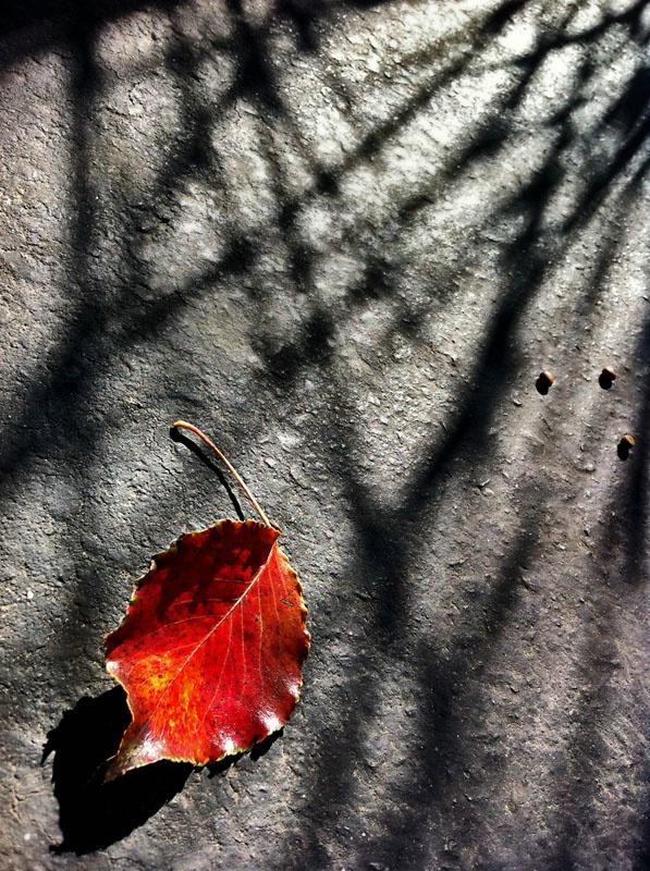 Last Leaf To Fall