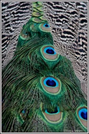 Exquisite Patterns & Textures