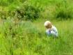 A  Child,s Curios...
