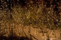 white-lights