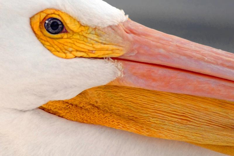 Pelican Folds