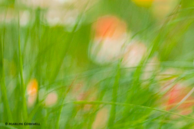 In Uli's Garden - ID: 11432797 © Marilyn Cornwell