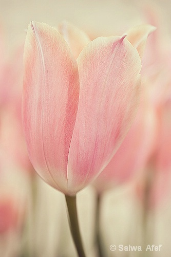 Tulip's Memory