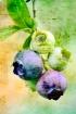 rustic blueberrie...