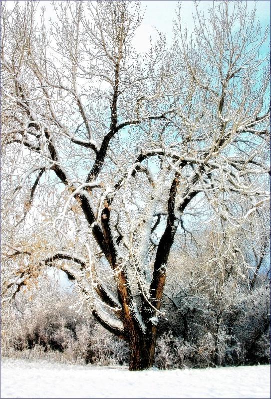 Winter Tree Design