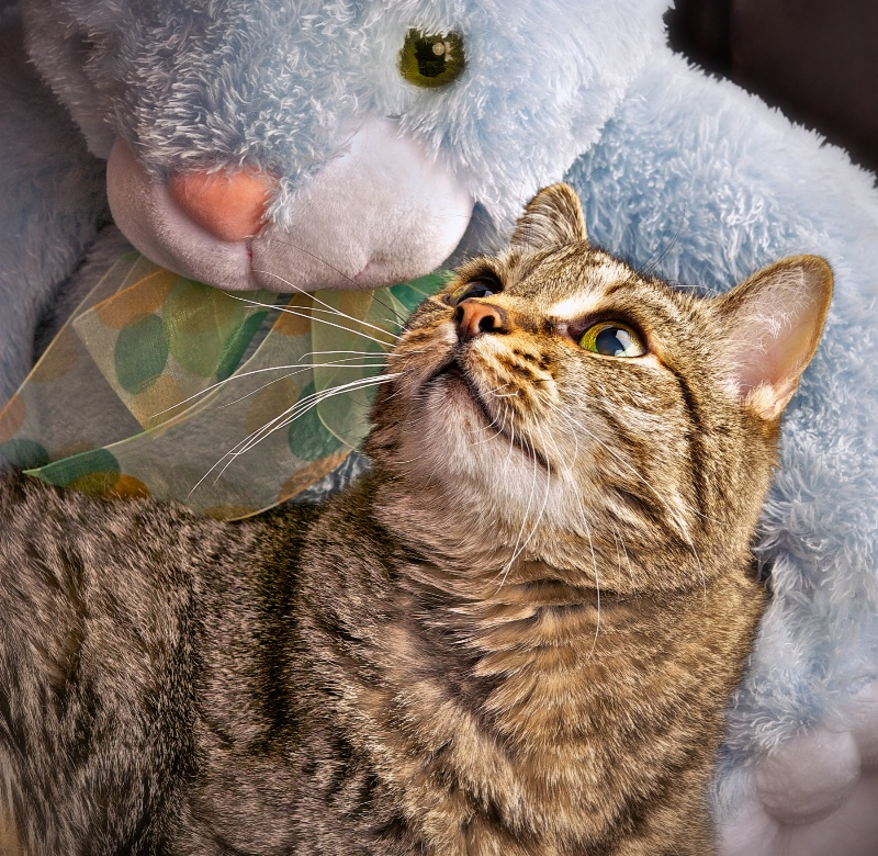 The Cat and the Bunny
