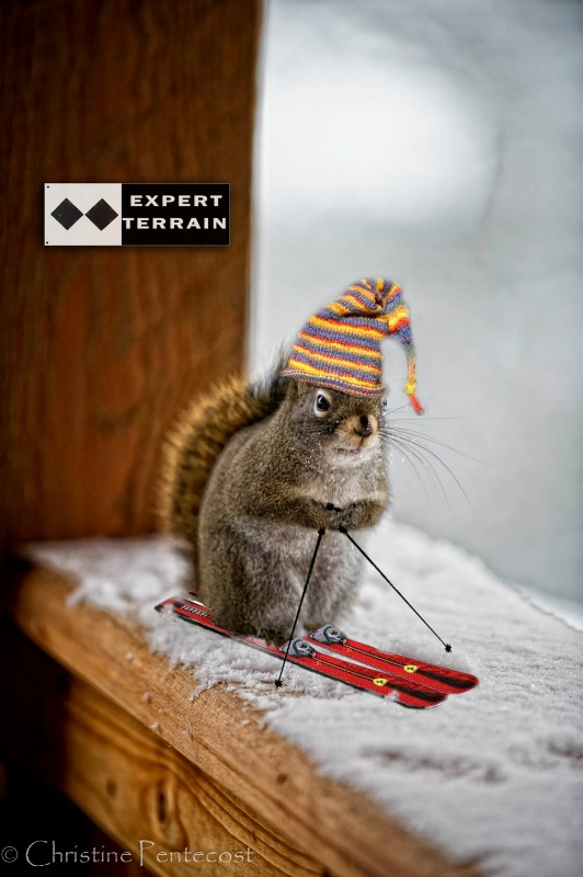 """Skiing Squirrel"""