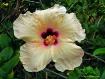 Cancun Flower