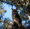 Mama Owl.