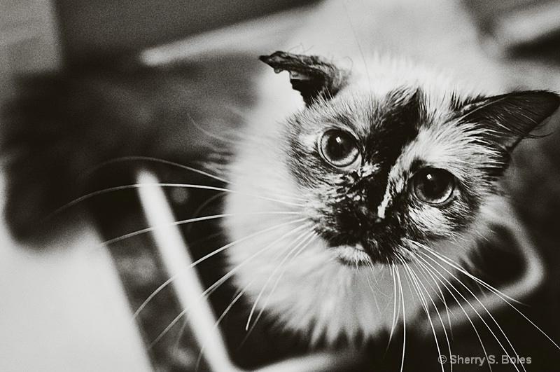 my Bella