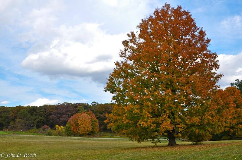 Regal Tree 3 - ID: 11478636 © John D. Roach