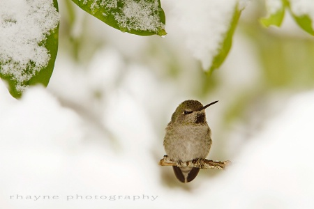 Hummer in the Snow
