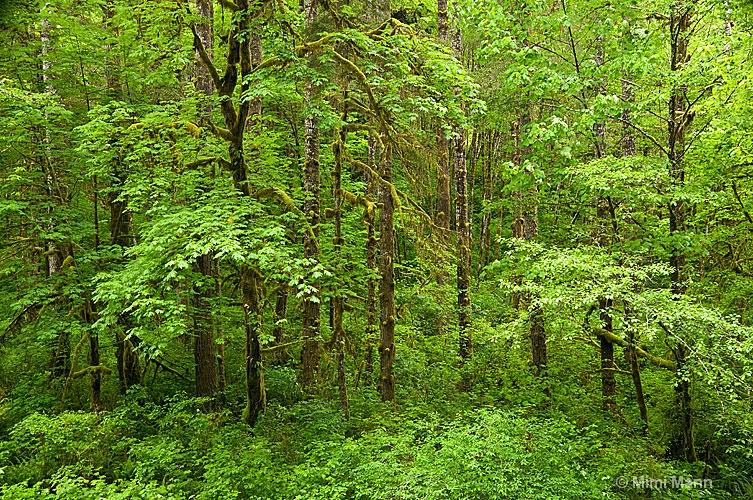 sweetwater-creek-falls-788-063 - ID: 11483141 © Marilynn Mann
