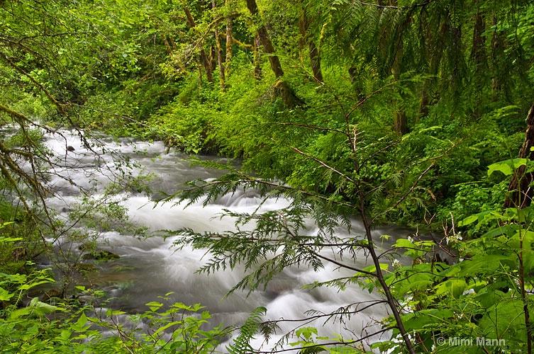 sweetwaterwater-creek-falls-788-064 - ID: 11483142 © Marilynn Mann