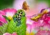 Frog & Butterflie...