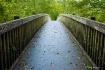 Bridge to the Eme...