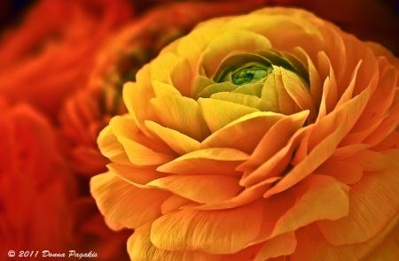 Glistening Blossoms