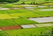 Fields O Green