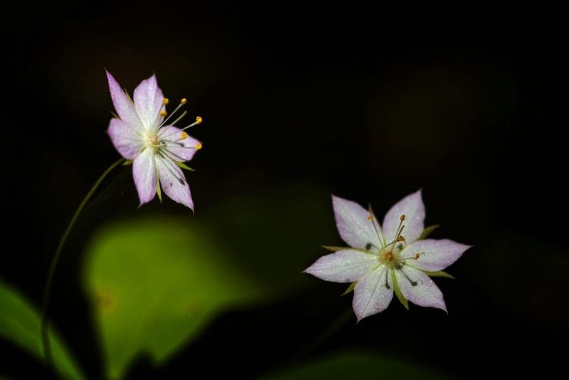 Forest Stars - ID: 11544654 © Norman W. Dougan