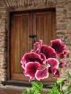 Antigua Door