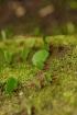Ants Go Green