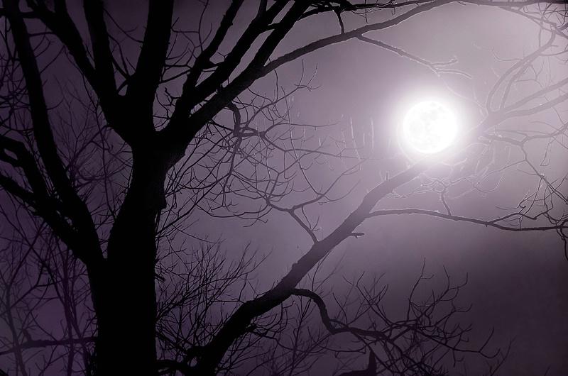 Moonlight Glow - ID: 11559115 © Eric Highfield