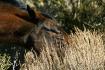 A Wild Horses Lun...