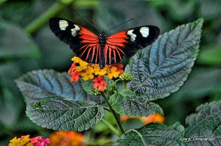 Pretty Butterfly.........