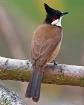 A common bird