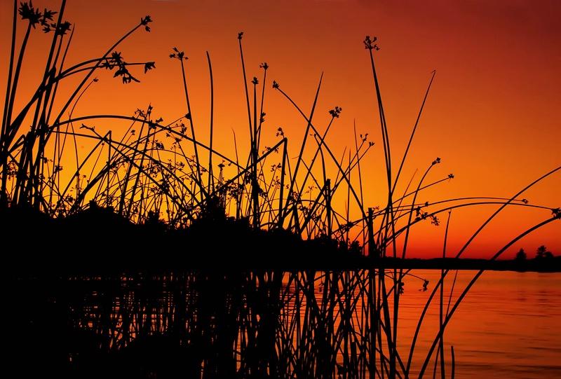 Through the Reeds - ID: 11570441 © Eric Highfield
