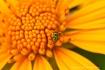 Florecido (flower...