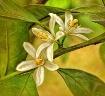 Same flower - dif...