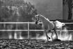asir- -horses ss
