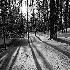 2Long Shadows of Winter - ID: 11595167 © Eric Highfield
