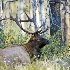 2Hideaway - Bull Elk - ID: 11603540 © Norman W. Dougan