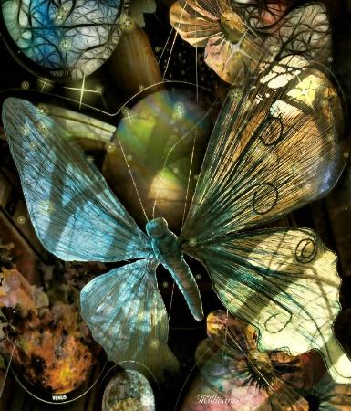 Butterfly Skies