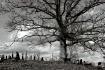 Lone oak, Old sou...