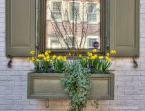 Window Boxes in Philly 2