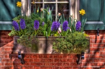 Window Boxes in Philly 1