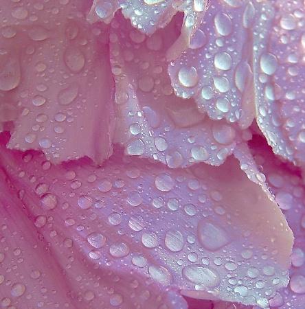 Delicate Petals & Drops