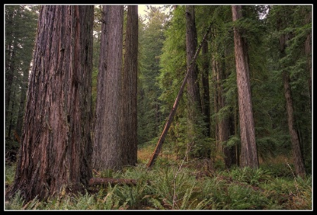Old Growth