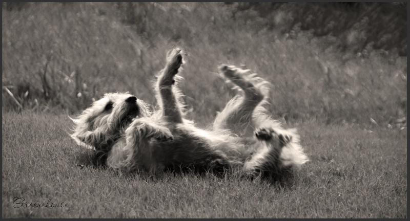 Happy Dancin' in the Sunlight