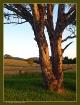 * Rural Tranquili...