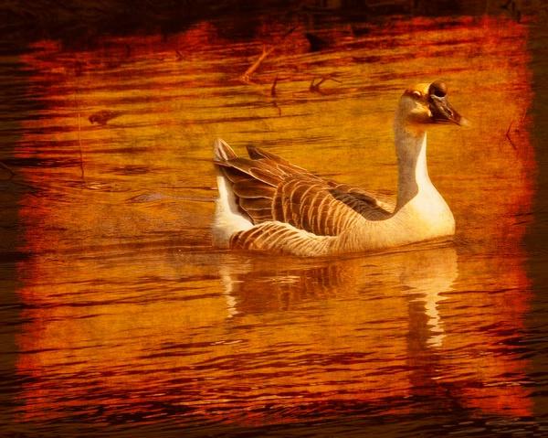 Grungy Goose