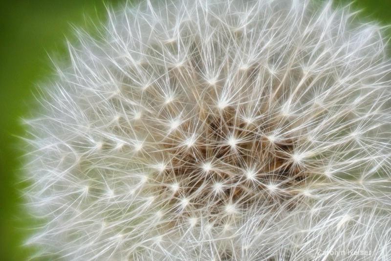 Lawn Jewel - ID: 11646075 © Carolyn Keiser