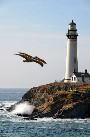 Two Pelicans At Pigeon Point