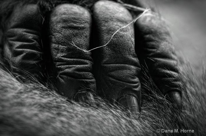 Gorilla Fingers