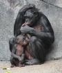 Mom and Baby II