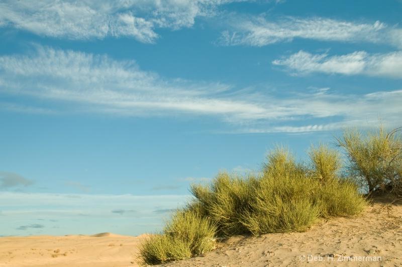 Sky and Dunes Grass - ID: 11679732 © Deborah H. Zimmerman